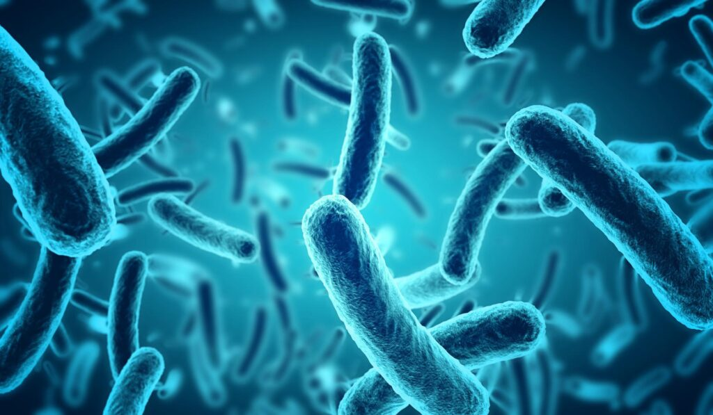 Bakterie żyjące w naszych mieszkaniach – jak sobie z nimi radzić